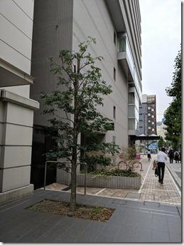 横浜のビルの屋上で植木のお手入れ